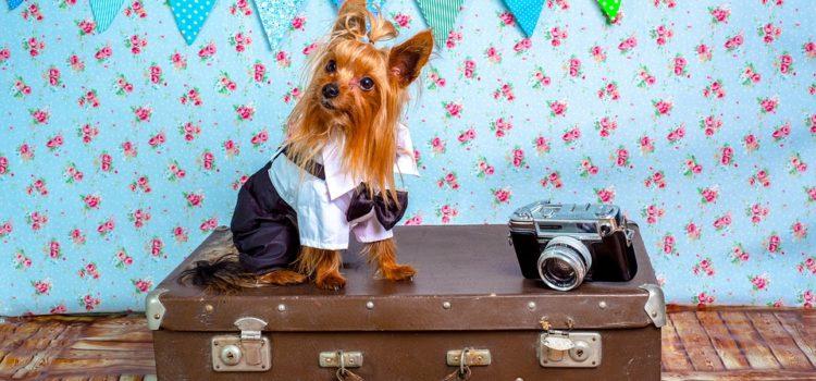 Viajar barato con tu mascota